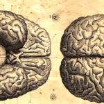 Cérebro - investigações filosóficas e científicas