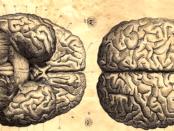 Cérebro - ciência e filosofia