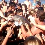 Sobre golfinhos e leopardos