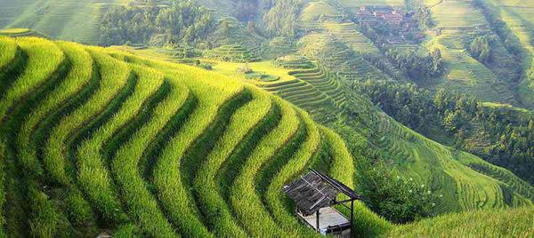 Taoismo - fazenda chinesa