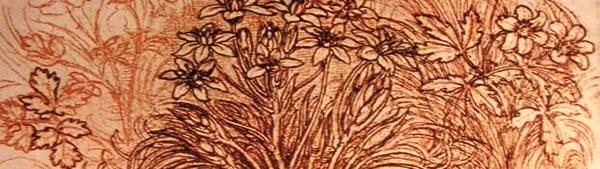Esboço de estudo botânico - Leonardo da Vinci