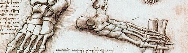 Esqueleto do pé - Leonardo da Vinci