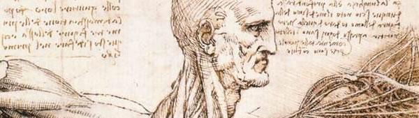 Estudo anatômico do ombro - Leonardo da Vinci