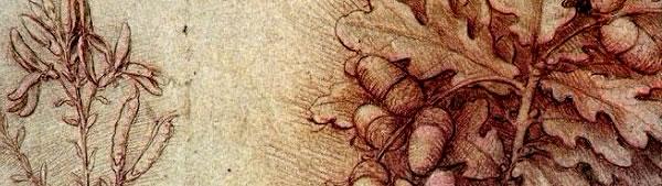 Ramo de folhas de carvalho - Leonardo da Vinci